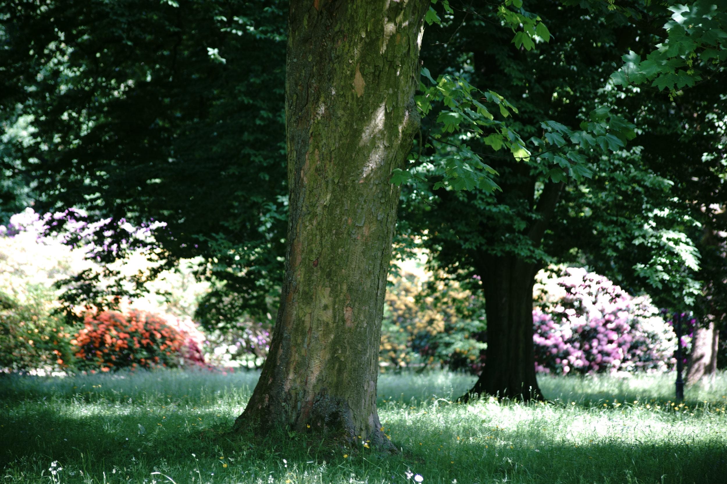 Shade Tolerant Trees and Shrubs