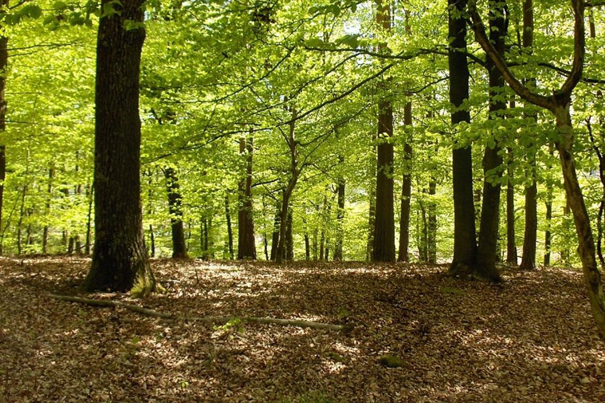Woods-In-Spring.jpg