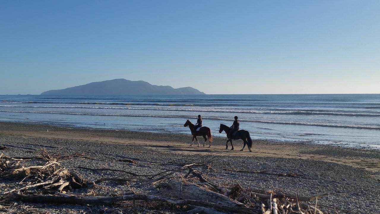 Horseback Riding - SwirlTwo-hour Waikanae Beach trek form the equestrian centre next to the Waikanae River in a beautiful rural setting, mount one of the well schooled horses or ponies, then ride down a track to wonderful beach on which to ride and outstanding sea vistas to enjoy along the sands of this wide open stretch for two hours with a stop at a beach café for good coffee and refreshments during the ride.(Suitable for experience riders; subject to favourable weather & tide conditions)