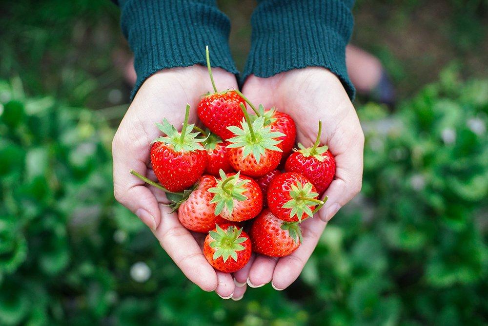 organic-food-iStock-933341652 copy.jpg