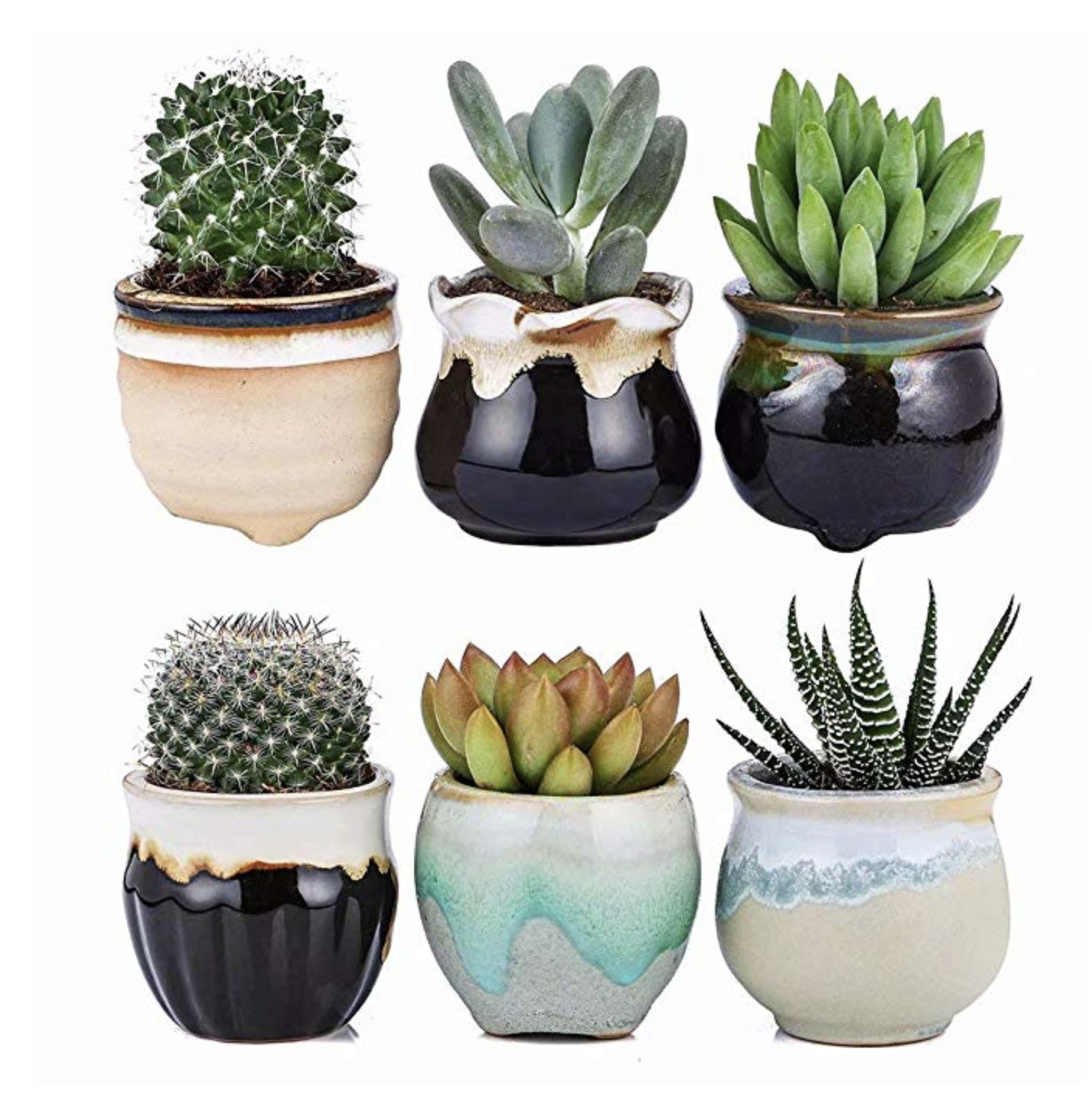 plants-and-planters.png