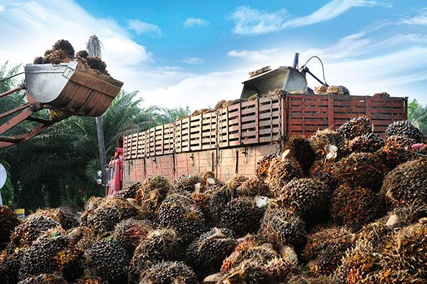 Palm Oil Mining Deforestation.jpg