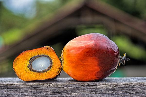 palm oil plant.jpg