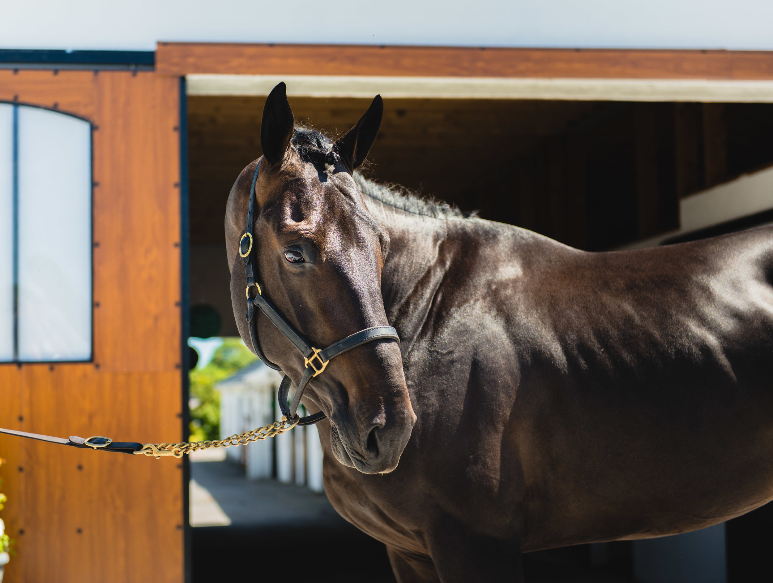 Our Stallions -