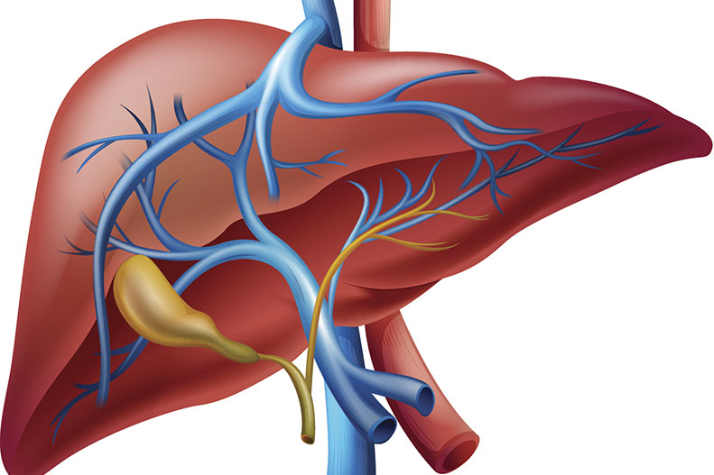 Liver Assessment -