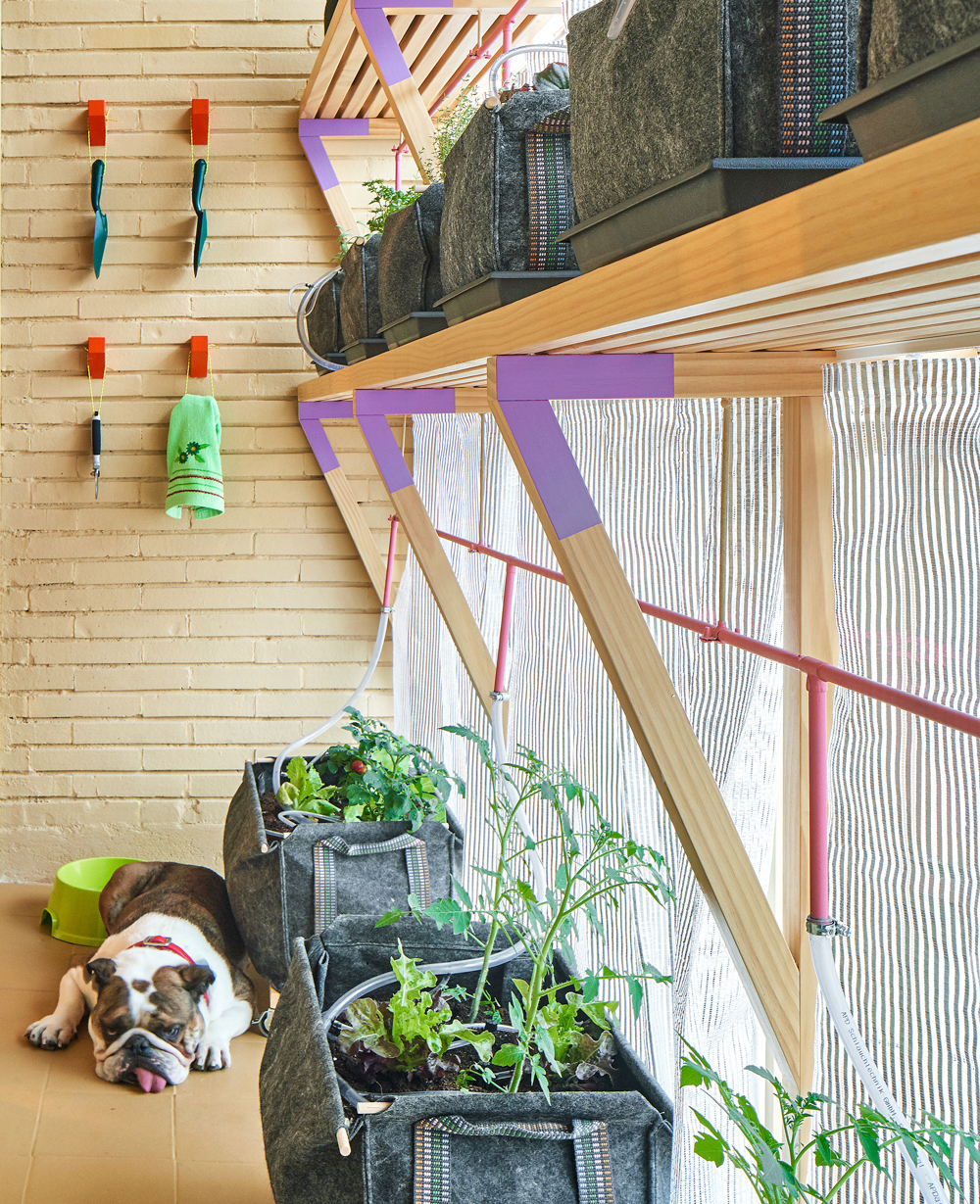 Home vegetable garden