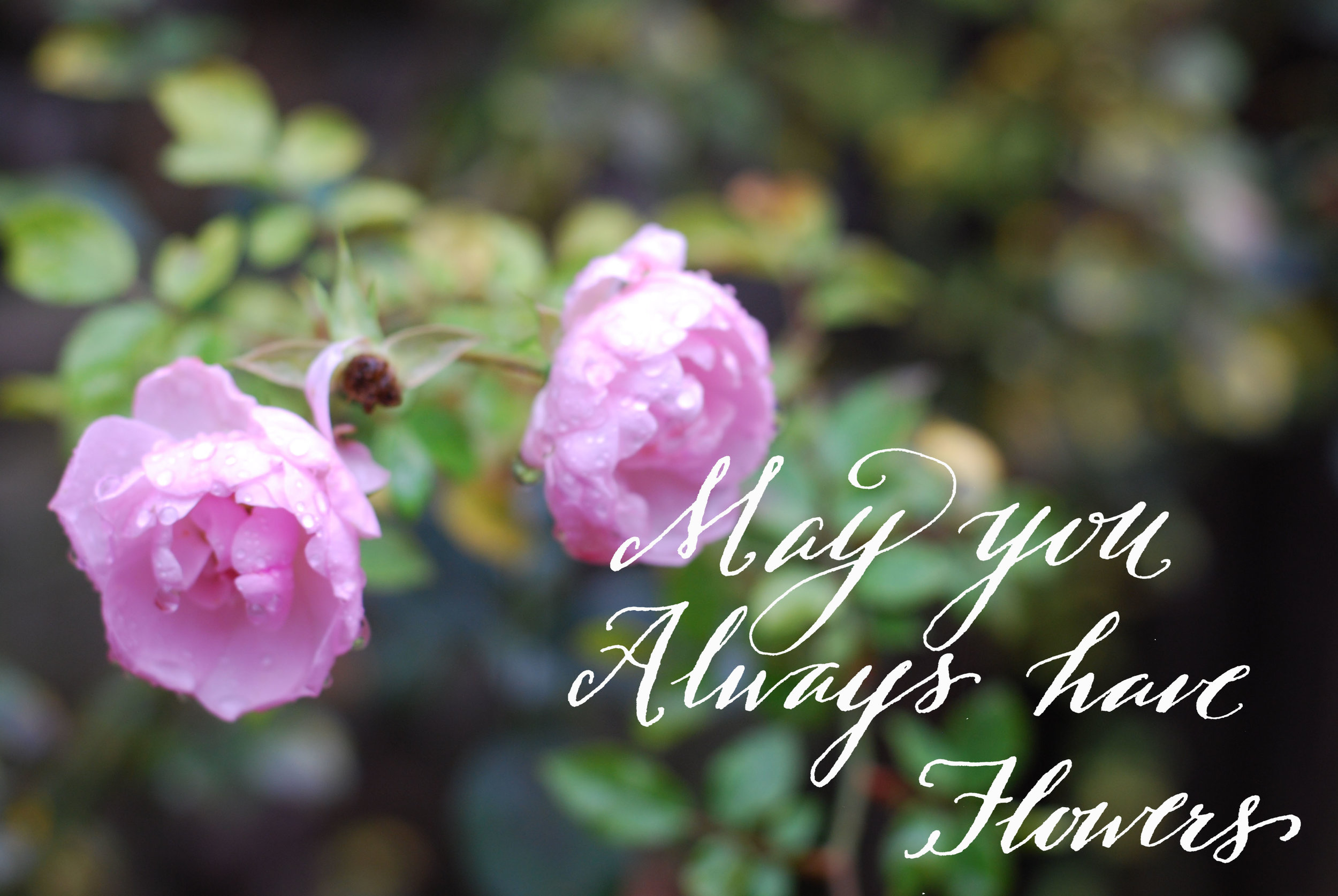 pink roses calligraphy card.jpg