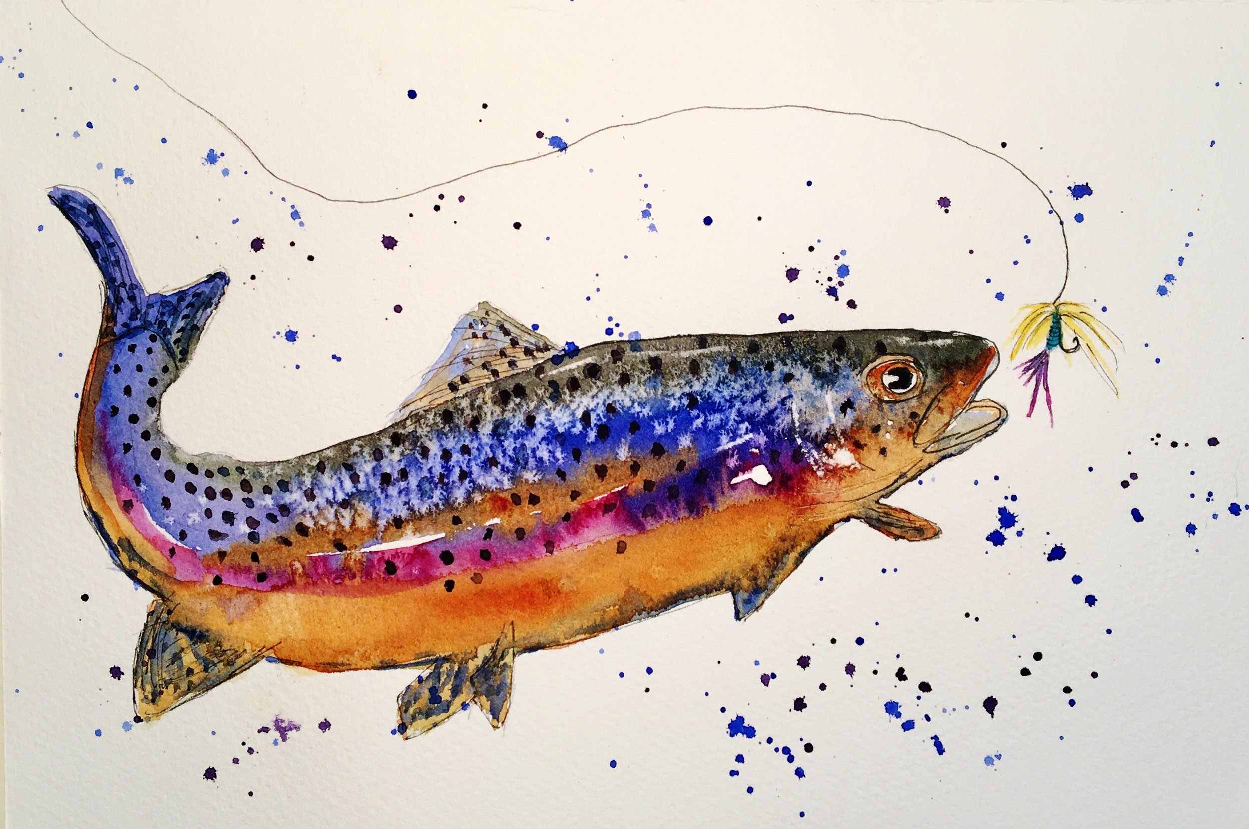 Blue rainbow trout with lure and splash.jpg