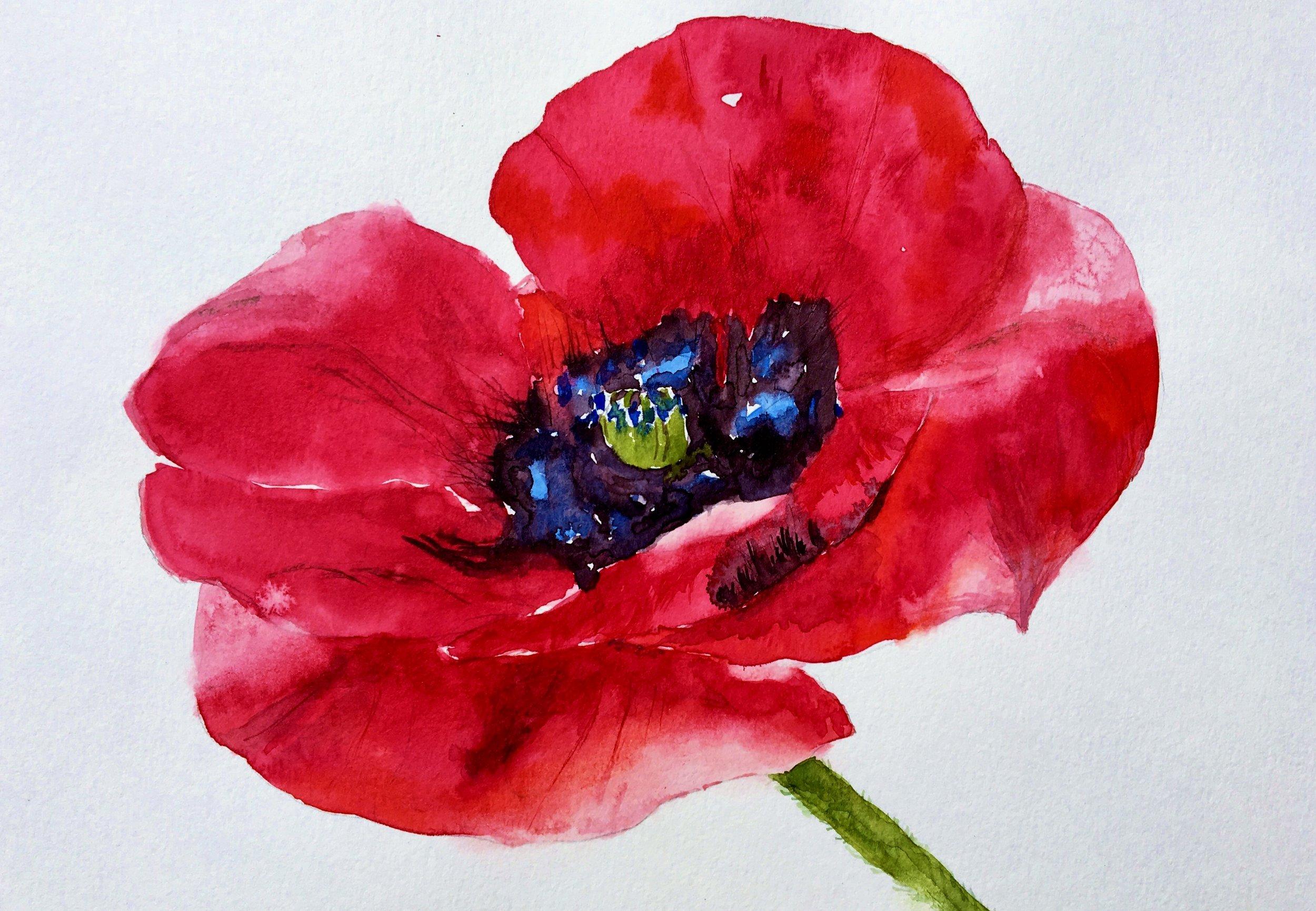 poppy pic for card.jpg