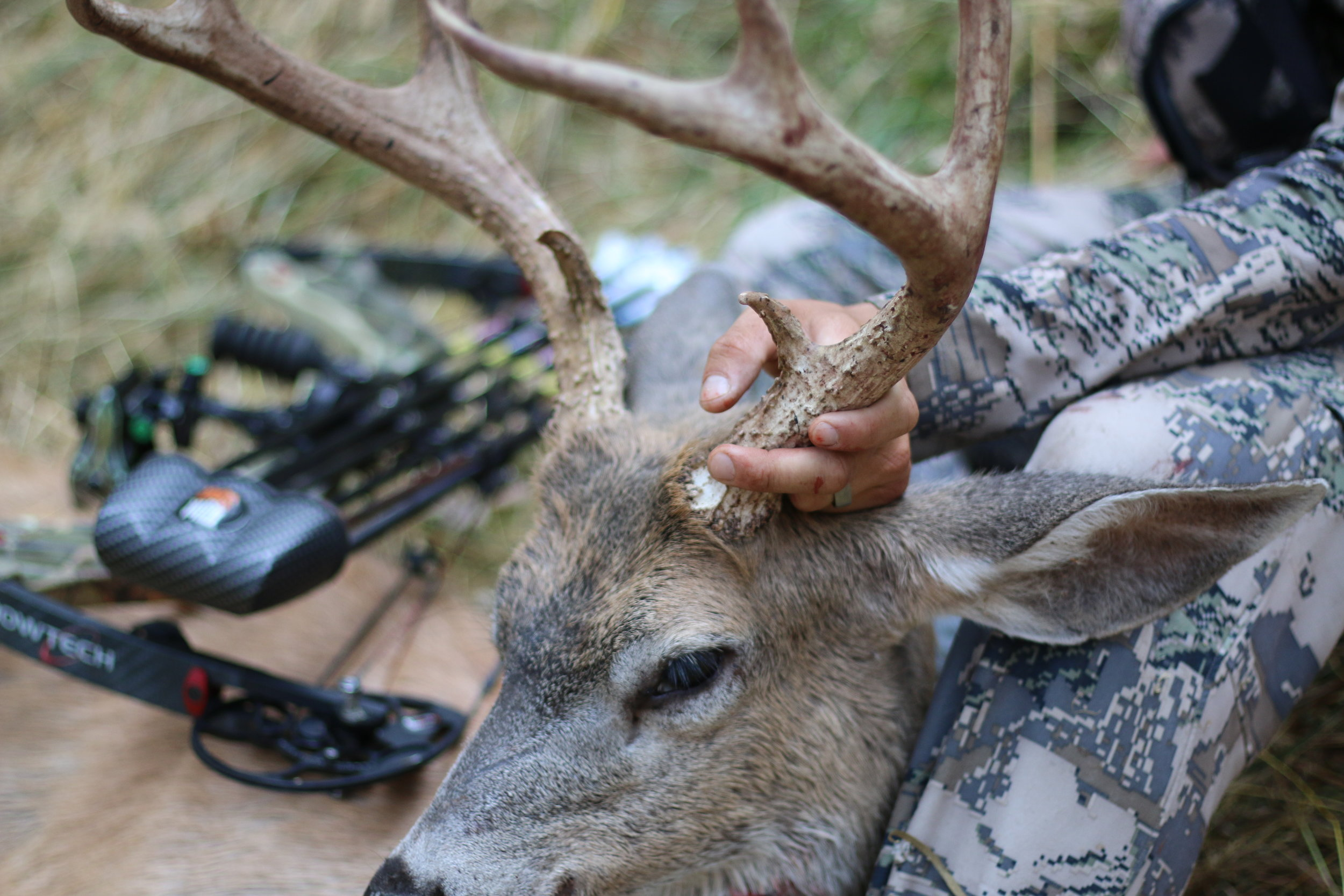 Blacktail deer | Wild boar | Turkey | waterfowl | Upland