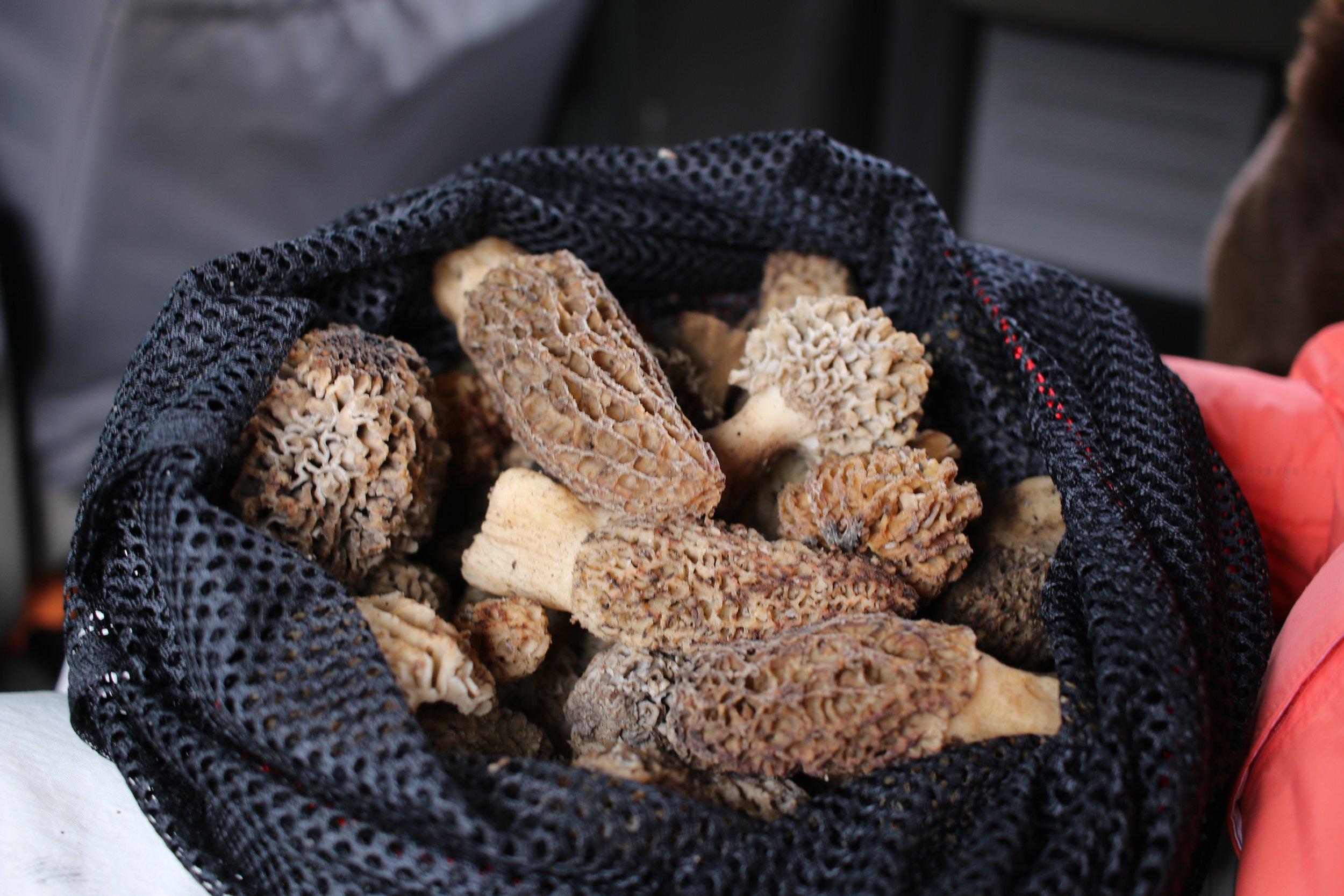 Mushrooms | Greens | blackberry | acorn | Wild grains | etc.