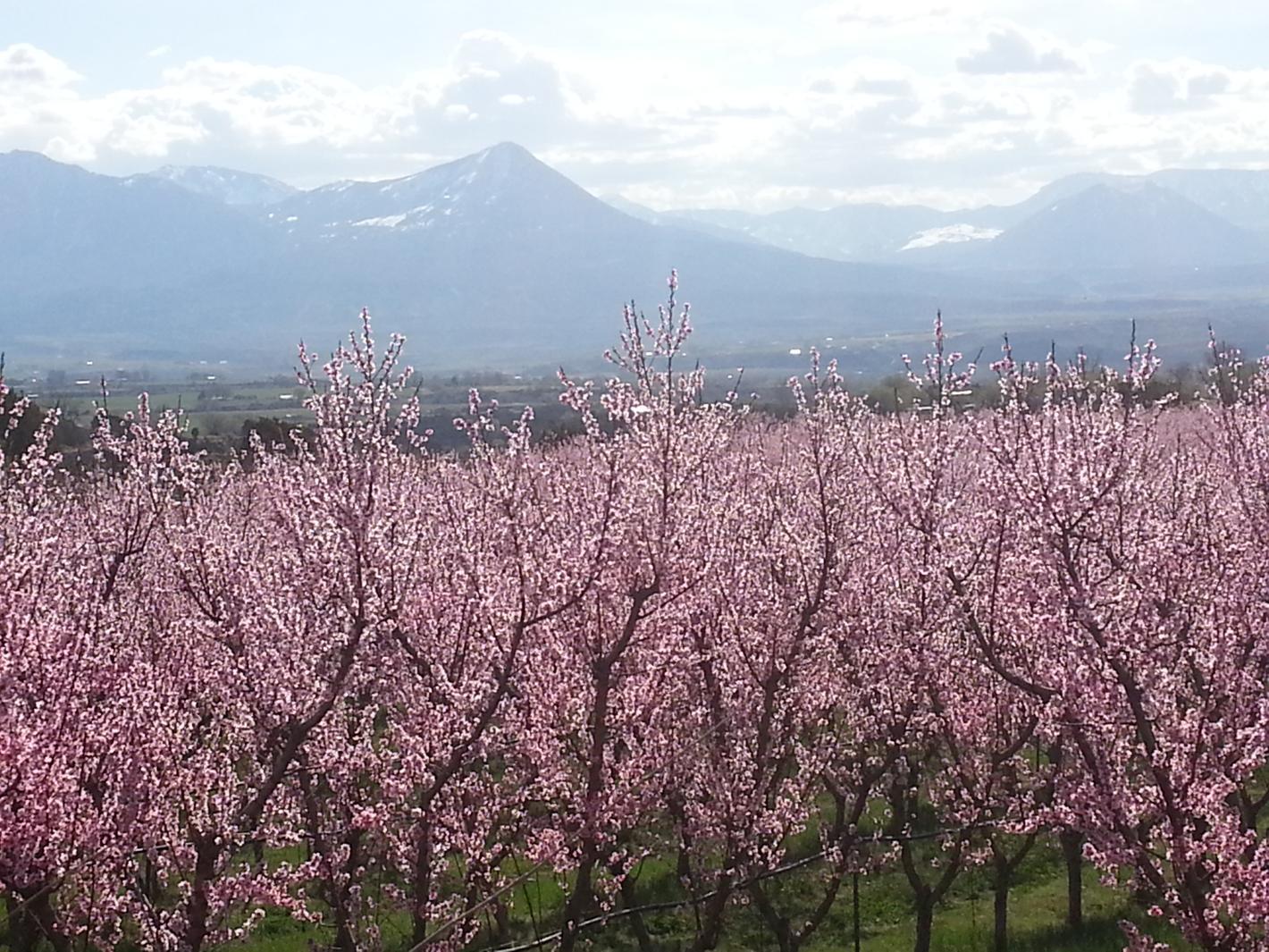 Osito Orchard