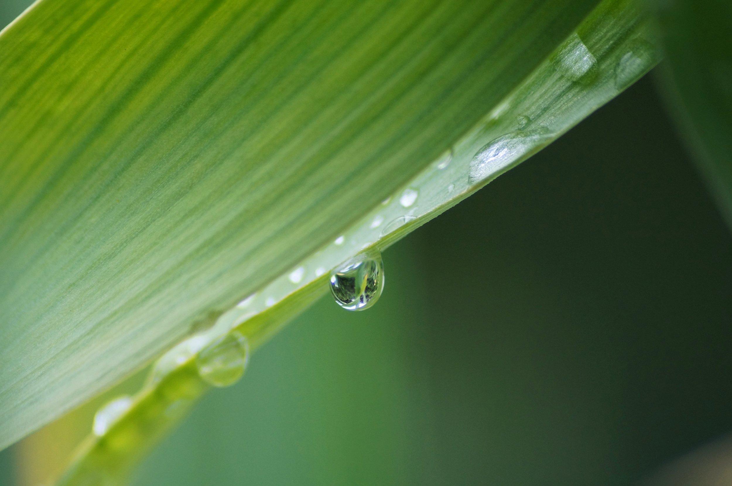 'Just Add Water'initiative -