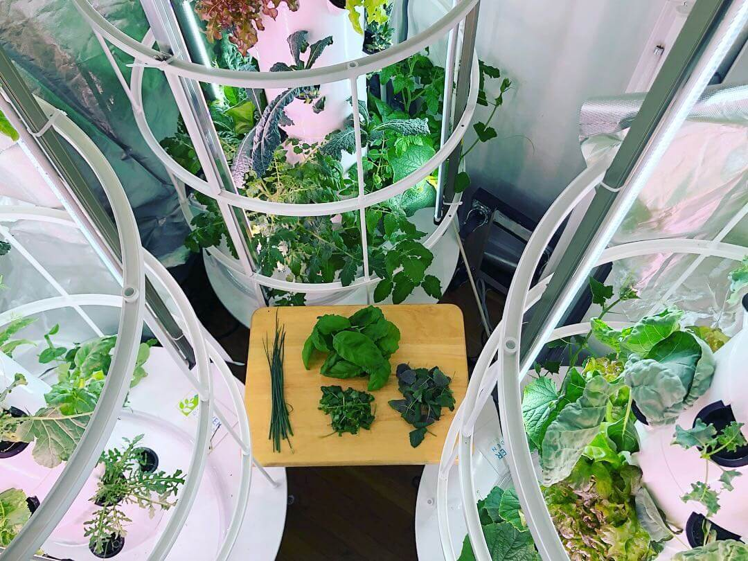 Monti advocates growing food at home, and maintains his own indoor grow for access to fresh, home-grown greens.