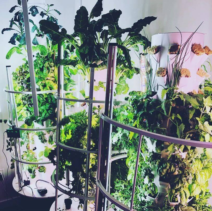Monti has his own indoor grow in Brooklyn, NY, where he experiments with environmental conditions and technology.