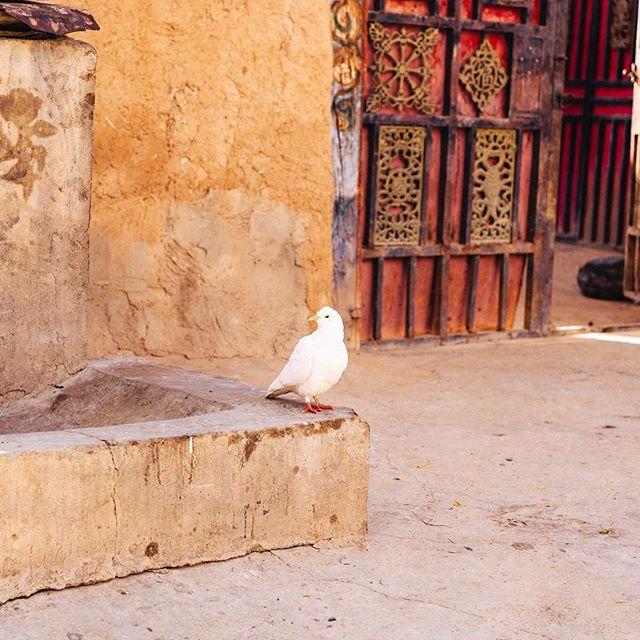 Peace . EastTibet . 2017  #travel #trip #sigma50mmart #kodakportra160 #vsco #bird