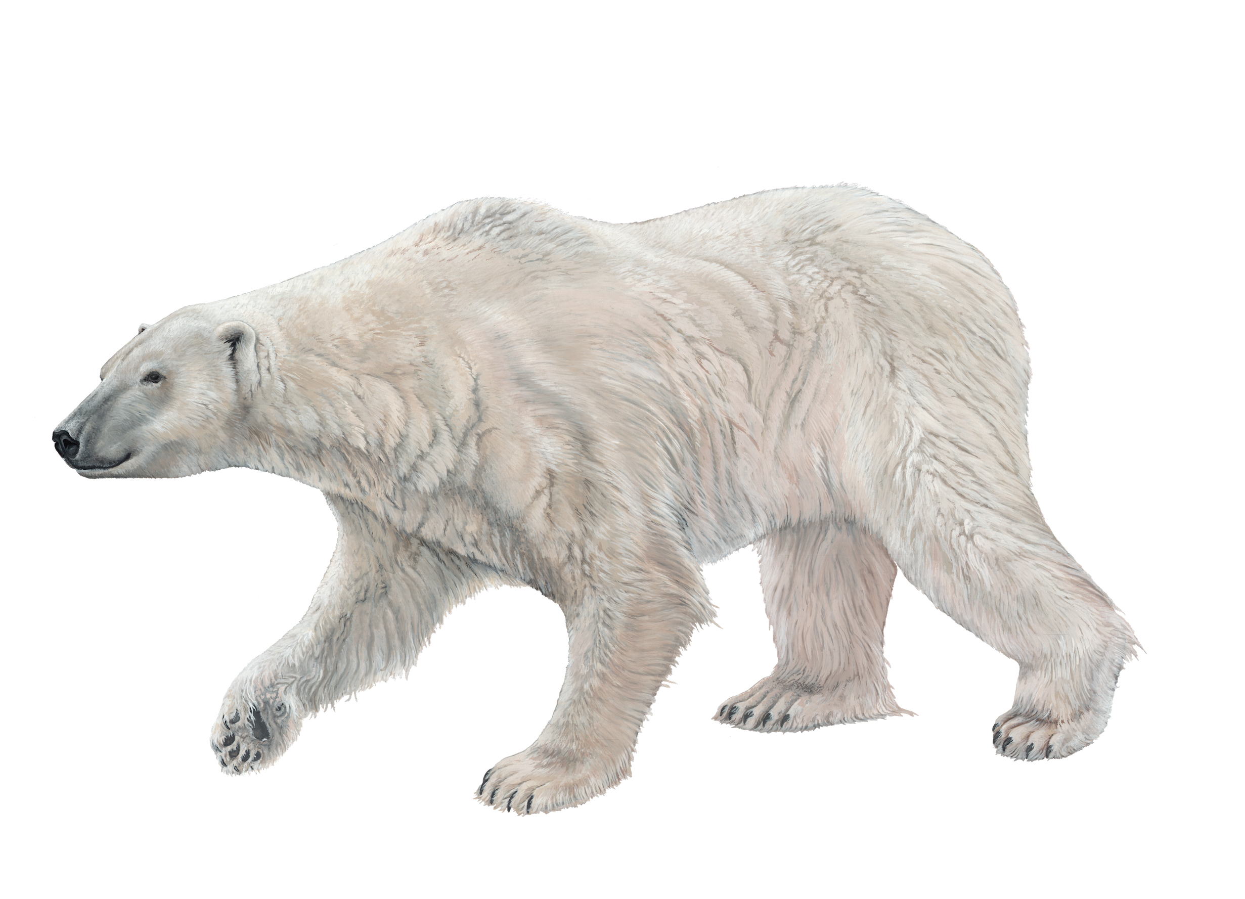 Polar Bear Sticker.png