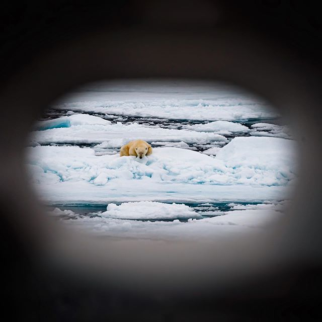 This bear spent a long time pretending it didn't notice us (the 450' ship...), but its ears are a giveaway. Shot through the hausepipe in the Beaufort Sea. . . . #arctic #wildlife #expedition #polarbear #bear #animals #travel #wildlifephotography