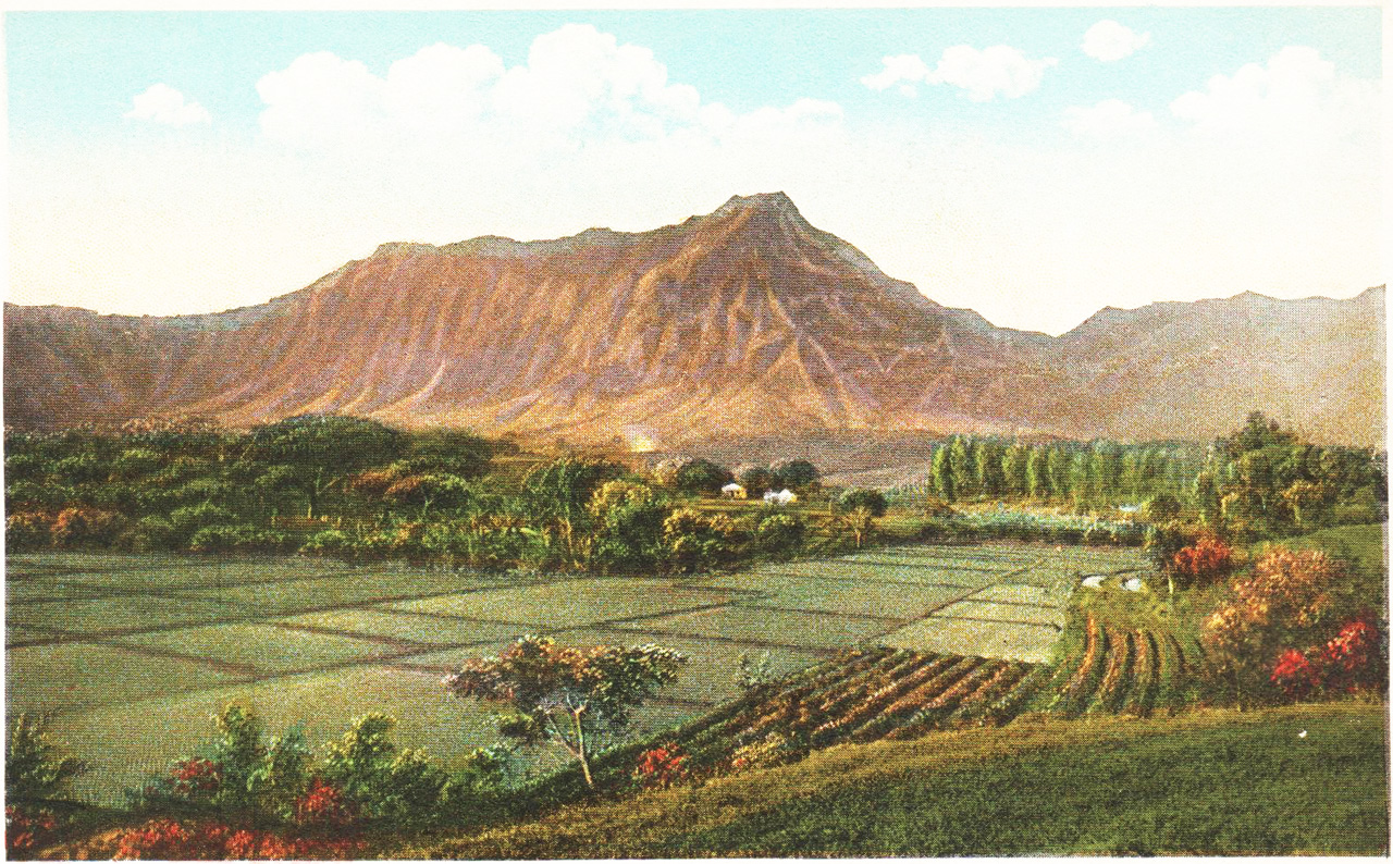 This postcard shows the rich diversity of wetland and dry land agriculture in Maunawili, c. 1929. (Private Collection)