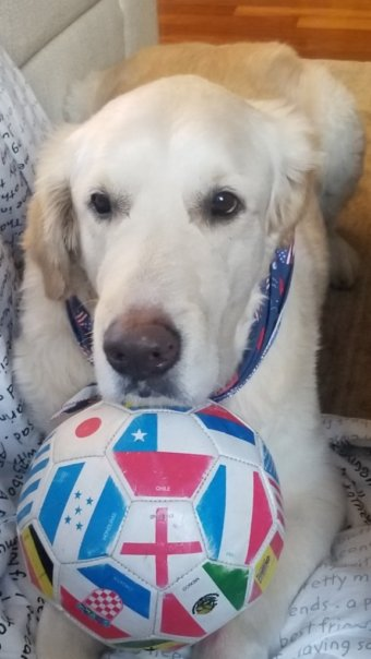 And as a part of the doing business with us you get the meet our company dog 'Barney' too - And as an update the ball is deflated now!