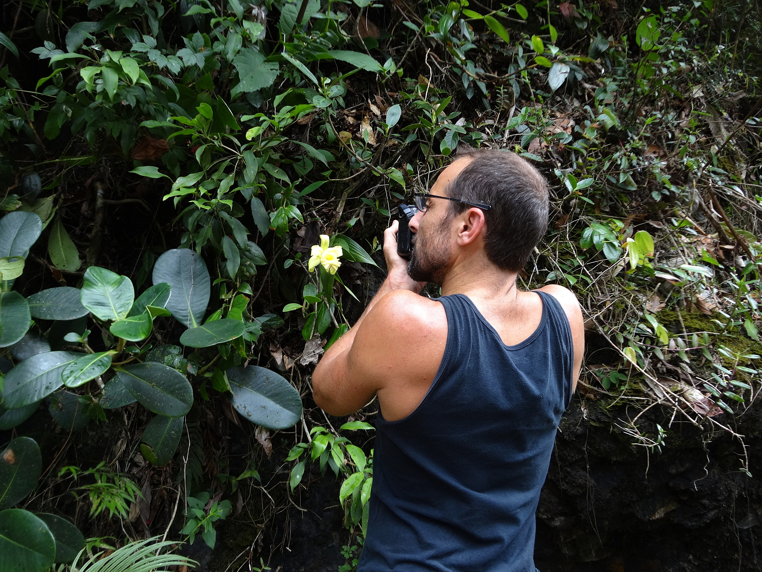 Fred Muller photographing a compact, small -flowered  S. xantholeuca  growing on an old road cut in central Guatemala