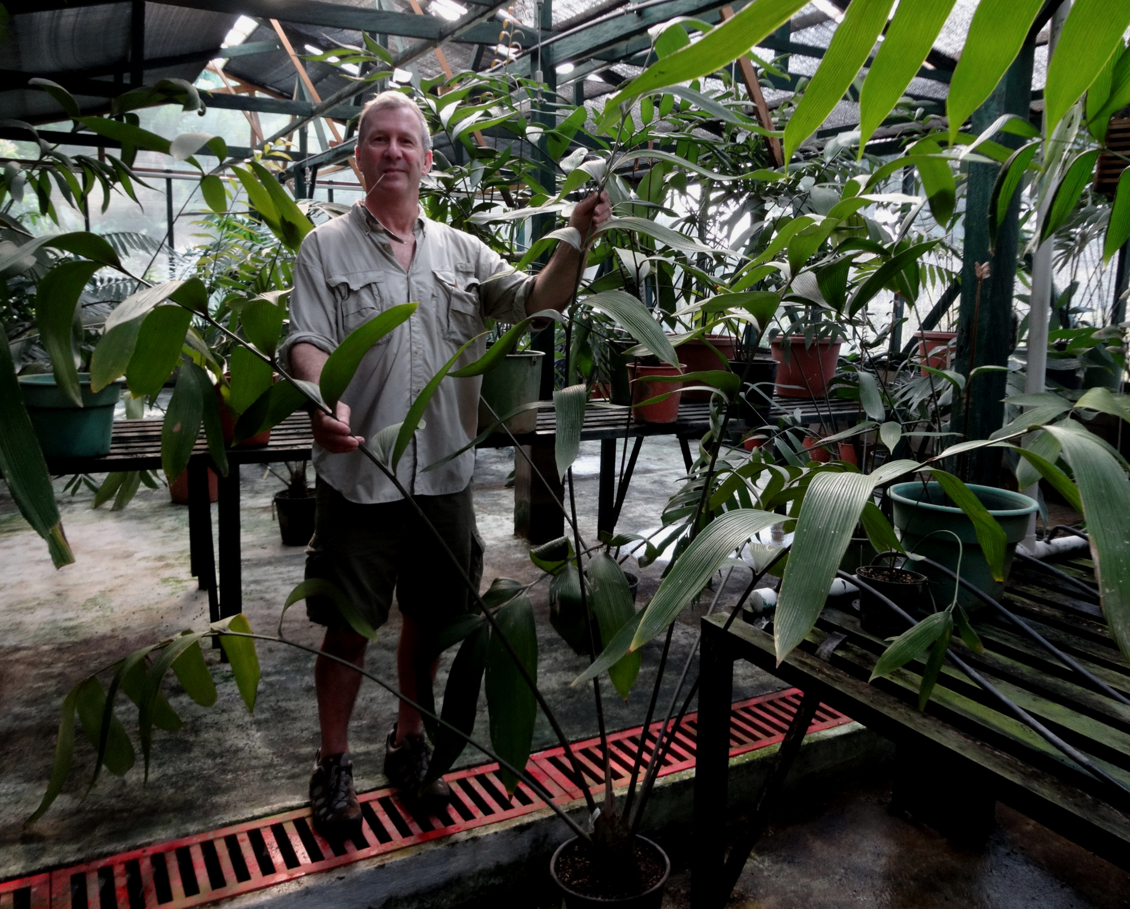"""The author and a large, greenhoused  Zamia imperialis  growing in a 12""""/30 cm pot in a private garden in Guatemala, together with other plicate-leaf zamias from my own and friends' collections."""