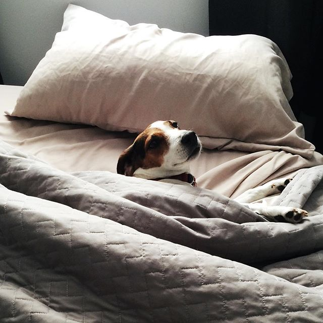 Millie sums up how I'm feeling this Saturday. It's currently -11°C (12°F) in this never-ending winter that has taken over Calgary, Alberta. Which means it's the perfect day to stay in bed and read the day away. ⠀⠀⠀⠀⠀⠀ Anyone else feeling these winter blues? ⠀⠀⠀⠀⠀⠀ #communityovercompetition.  #onlinebusinessmanager  #womenentrepreneur #womensupportingwomen #creativebiz #businessgrowth #bizgrowth #realtalk #smallbiz #solopreneur #soulpreneur #feamc #creativepreneur #purposedriven #sayyestosuccess #authenticity #worksmarternotharder #dowhatmakesyouhappy #womensupportingwomen #dowhatyoulove #fueledwithheart #doitfortheprocess