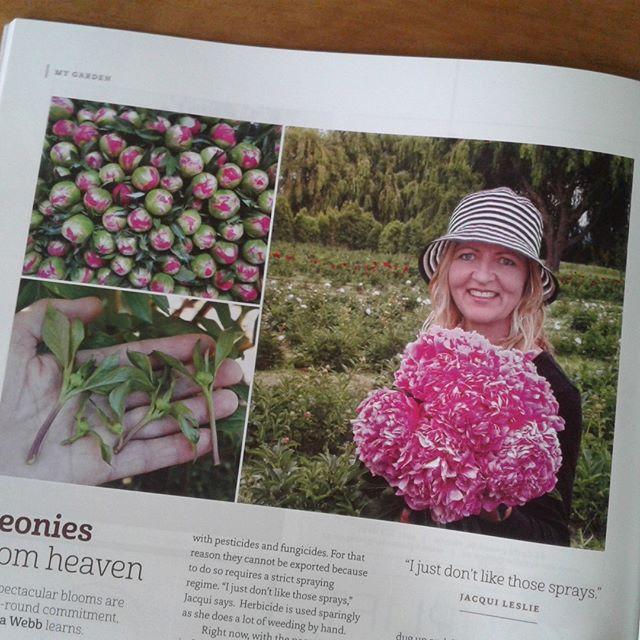 There is an awesome article in Wild Tomato this November about Paeonies!! 😉  #wildtomato #paeonies. #peonies  #peony  #loveMarlborough #marlboroughcelebrant #marlboroughnz #love #wedding #blenheim