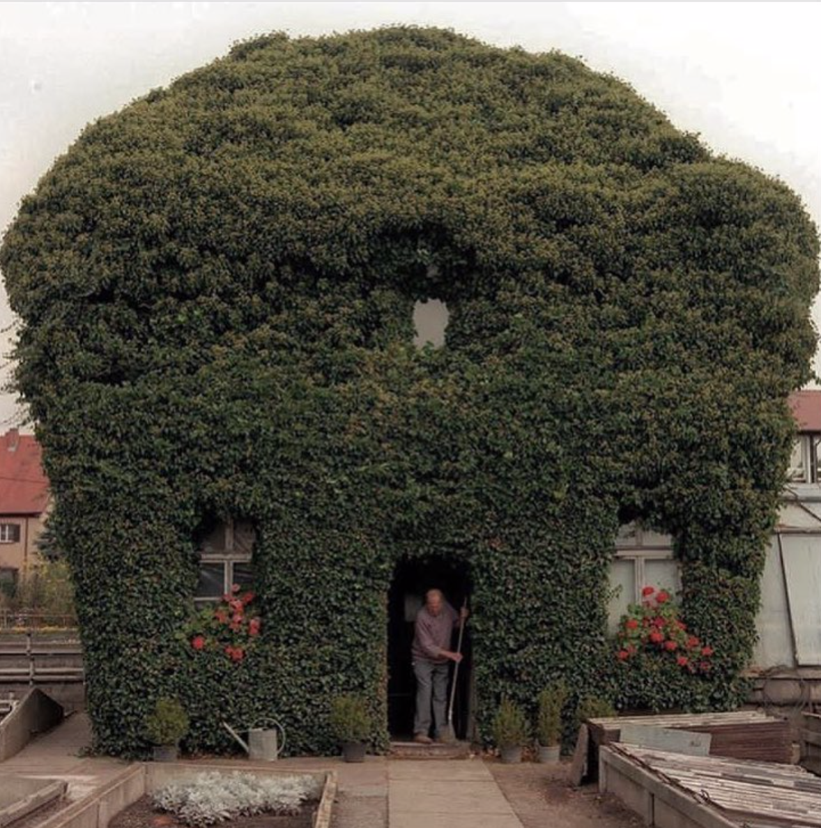 Ivy covered house in Hammelburg, Germany by Wolf-Dietrich Weissbach