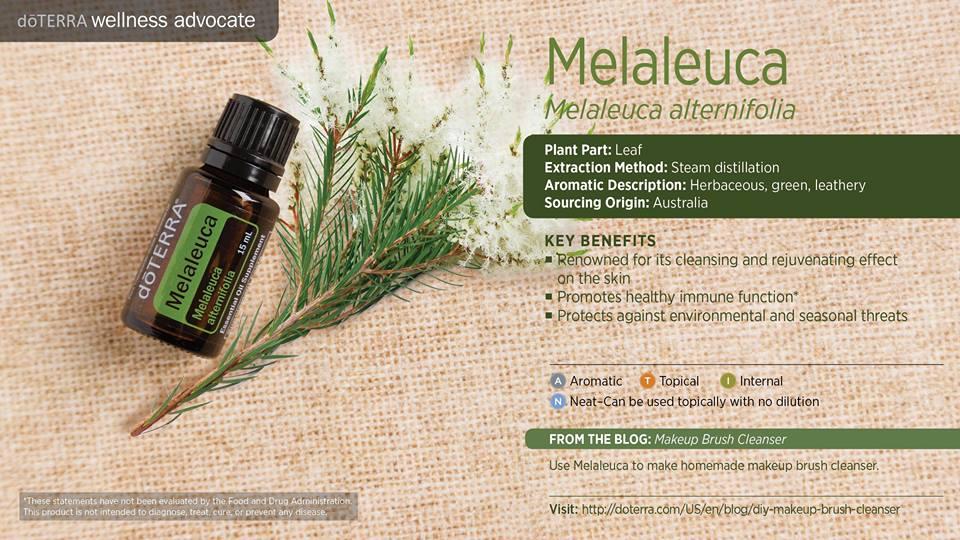 doterra-melaleuca-tea-tree