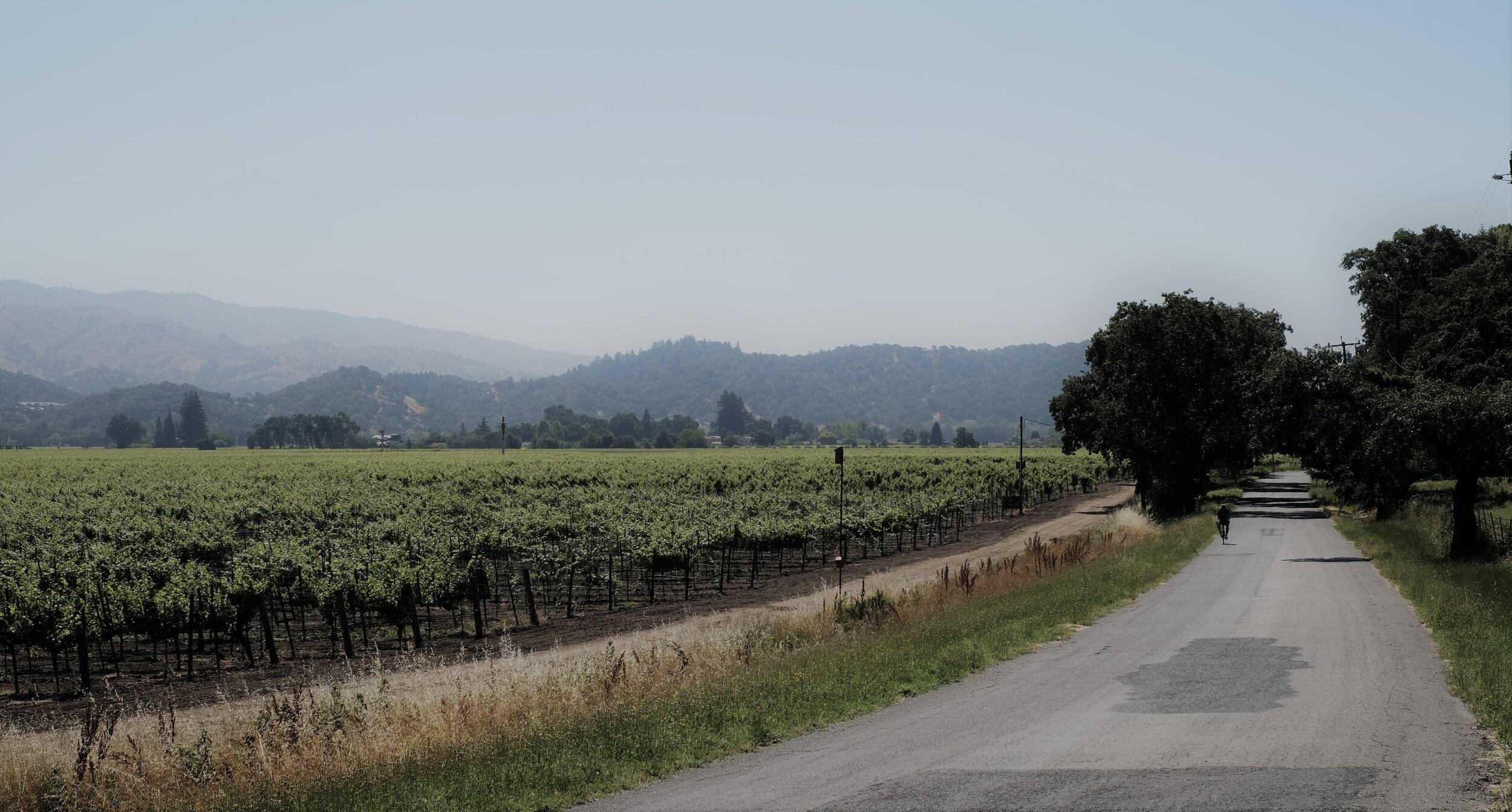 Napa Valley, California USA