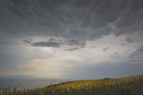 Dark-clouds-over-yellow-field-7253.jpg