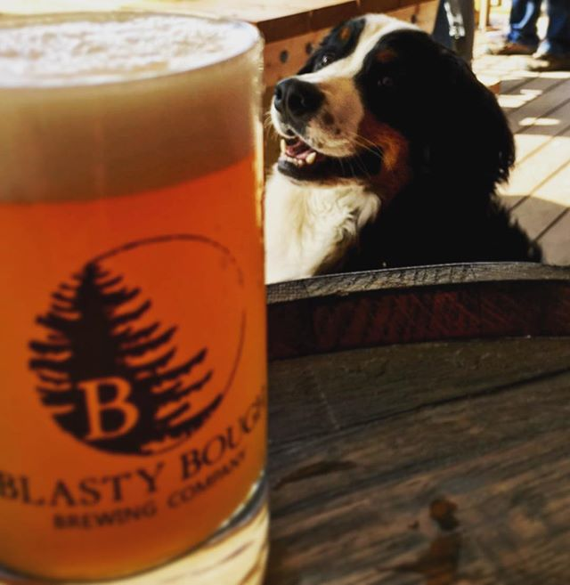 Sully is enjoying the ☀️on the @blastyboughbrewingcompany porch! Come give this Good Doggo some scritches!