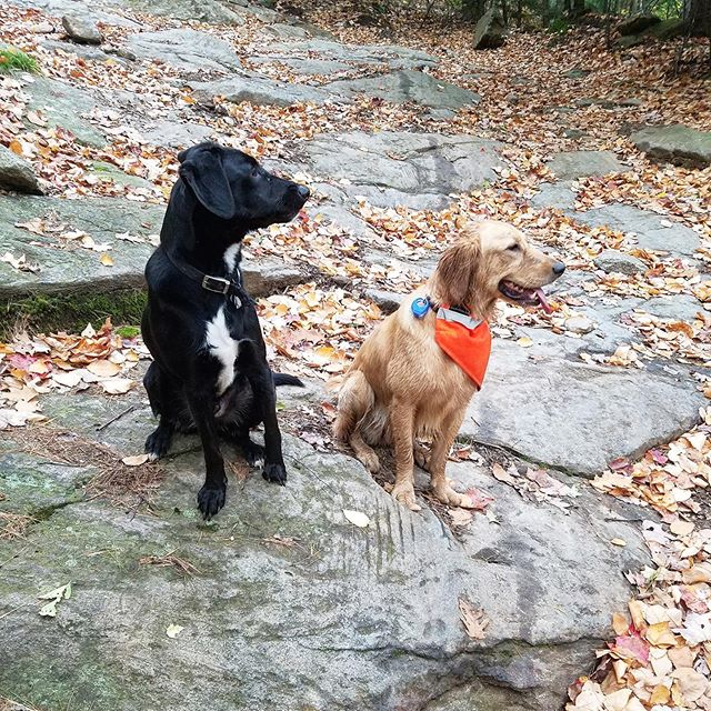 My bestie Kallie and I went for a hike today! #bestfriends #dogfriends #LEEFS #SOMANYLEEFS
