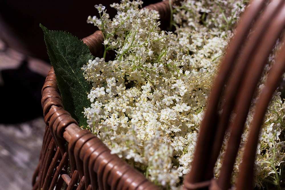 foraged-elderflower_botanical-folk.jpg