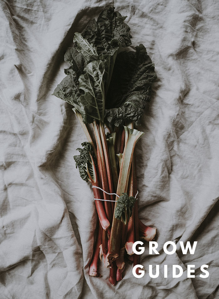 botanical-folk-grow-guides.jpg
