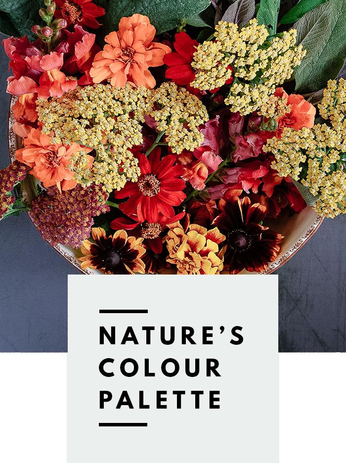 botanical-folk-natures-colour-palette-natural0-dye-plants.png
