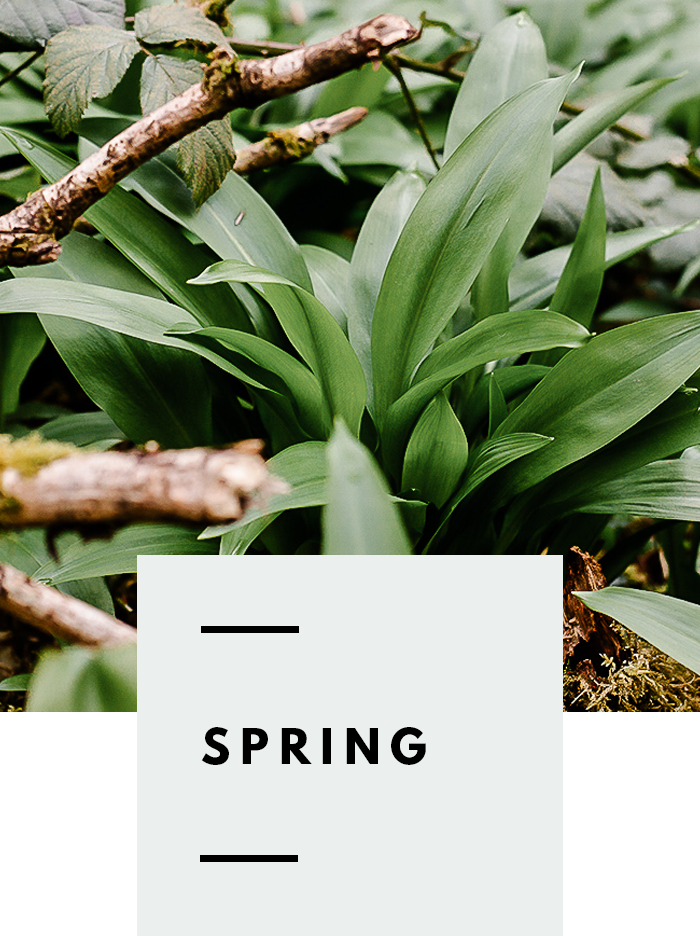 botanical-folk-gather-spring-guide.png