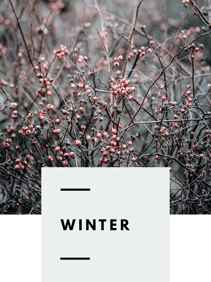 botanical-folk-gather-guide-winter.png