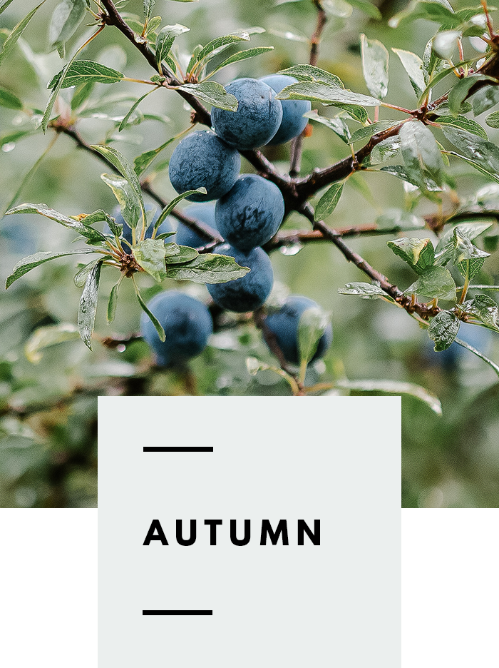 botanical-folk-gather-guide-autumn.png