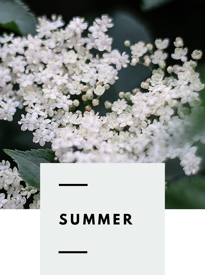 botanical-folk-gather-guide-summer.png