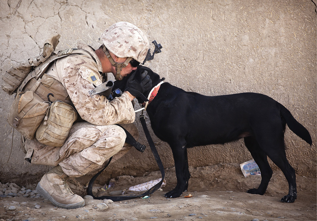 Give-Back-Wisconsin-Pets-For-Vets-Project