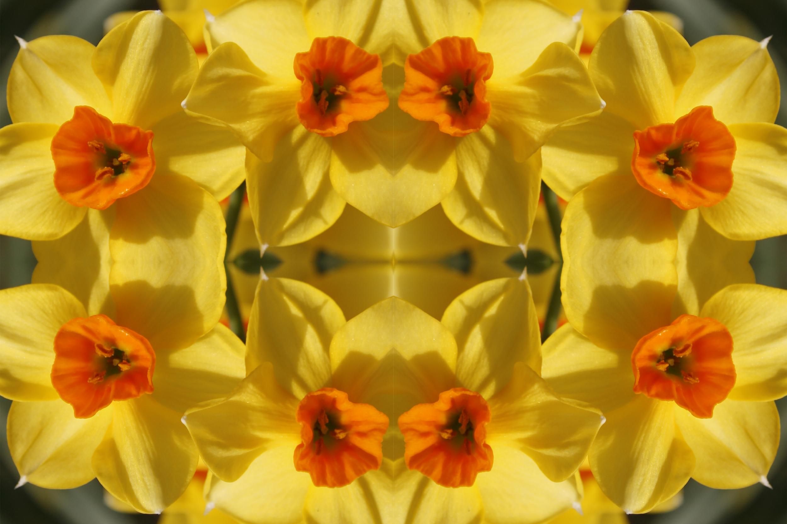 daffodilteatowel.png