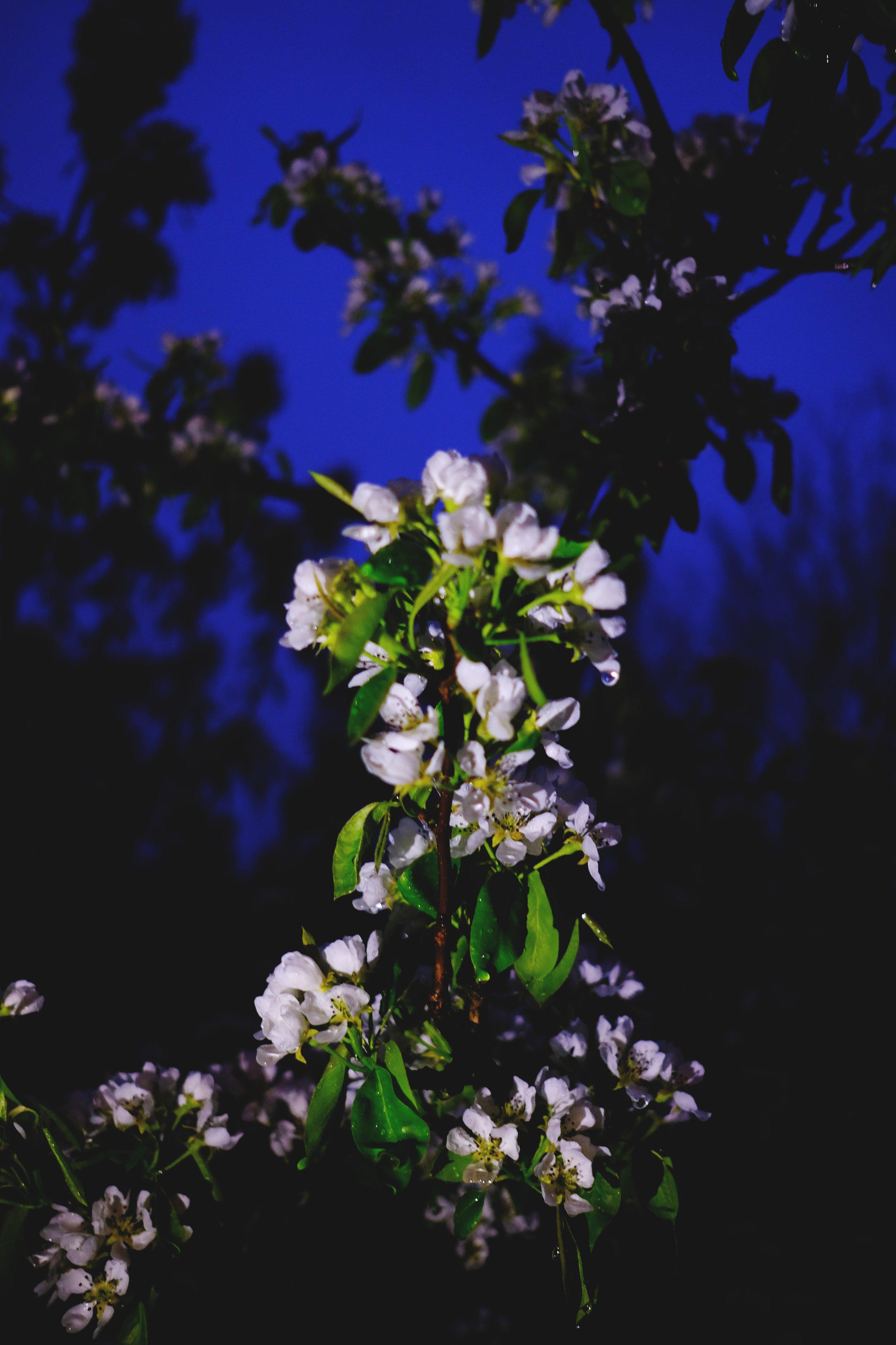 flowers_night.jpg
