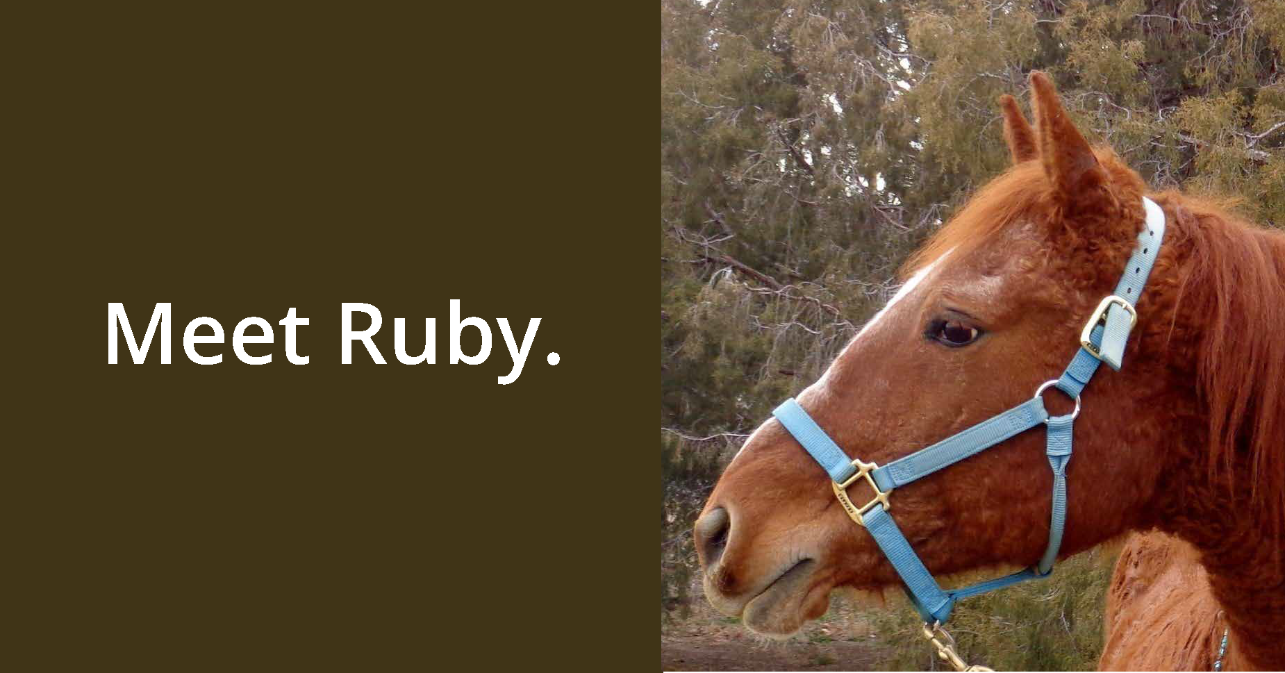 Meet Ruby GIF copy_Page_1.png