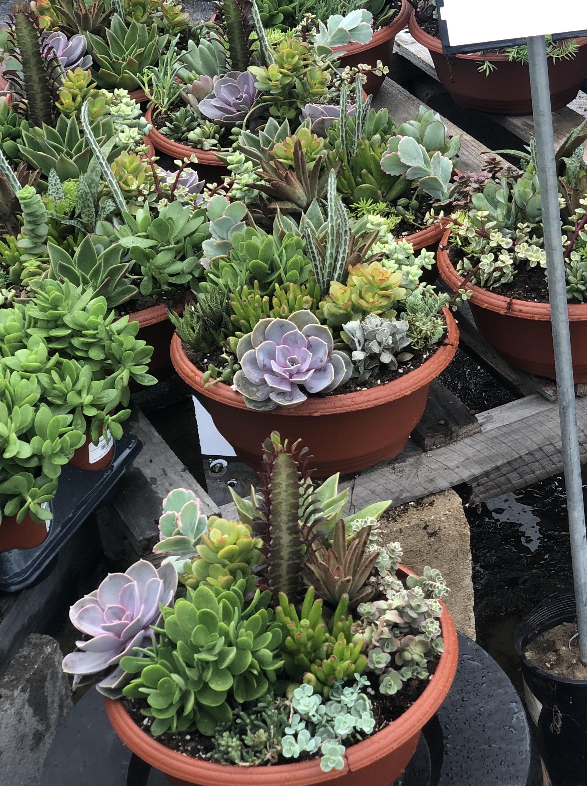 Succulent Bowls - $28