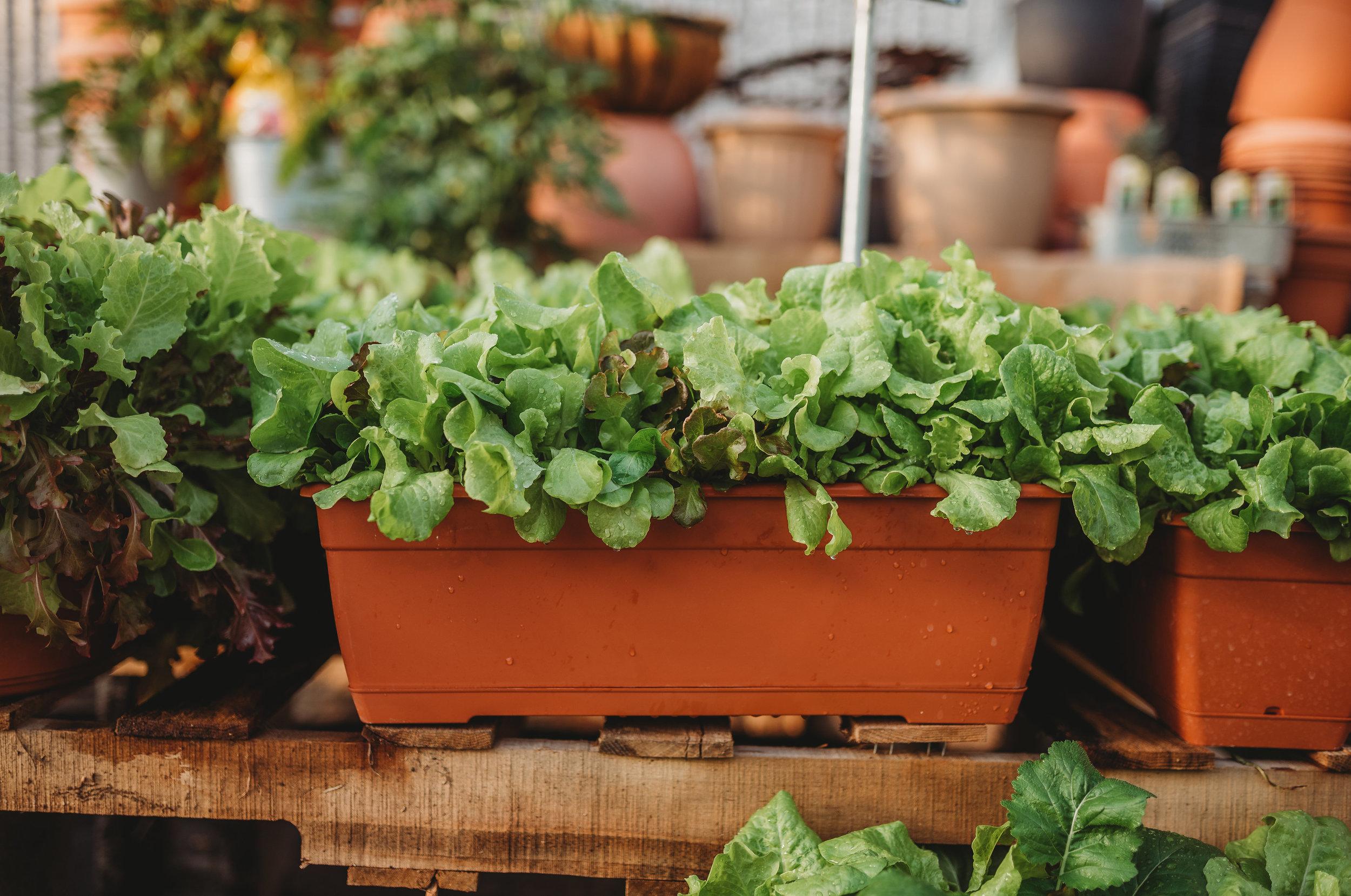 Lettuce Bowls - $10