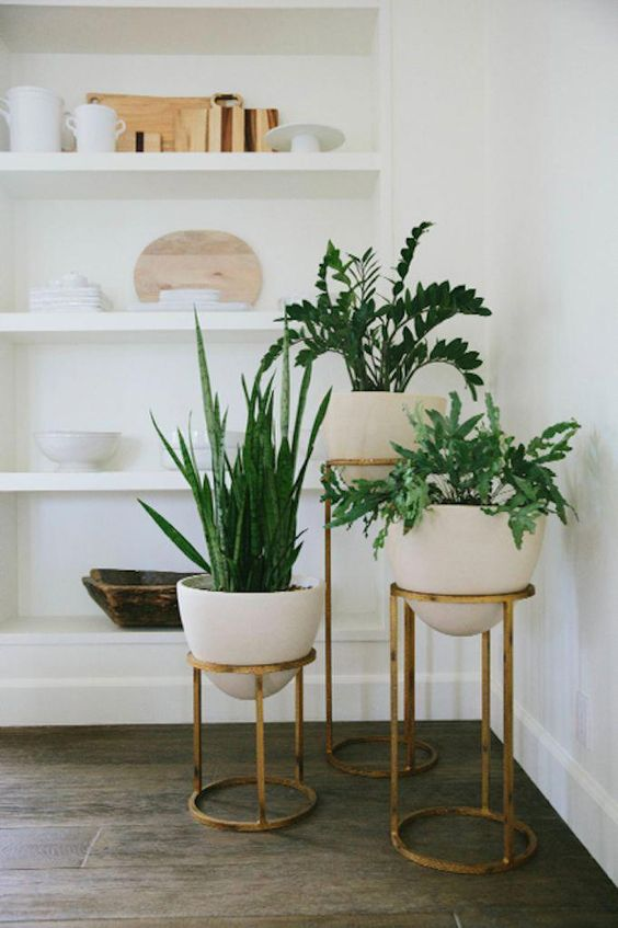 Create A Living Space Top 10 Indoor House Plants Pelican Post