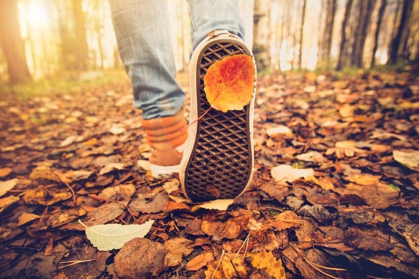55631812_M_Fall_Leaves_Shoes_Dead_leaves_Trees_Sun_Walking_jeans_Vans_Denim_.jpg