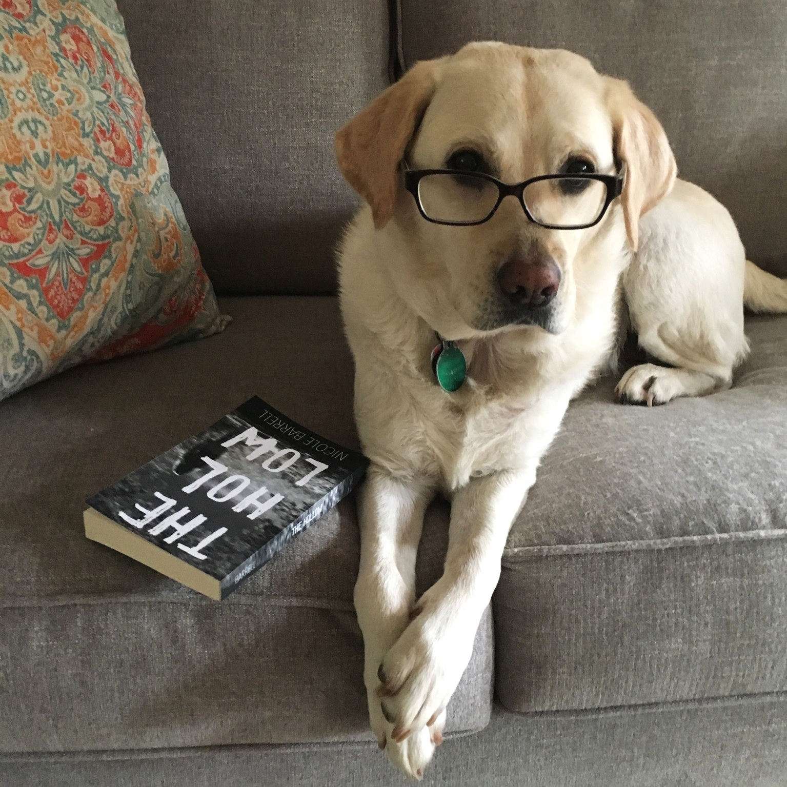 Lily can't stop raving about this book I wrote— - more…